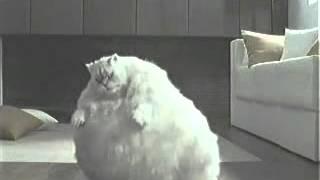 Eine Dicke Katze will abnehmen