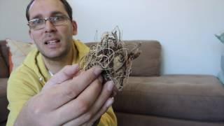 Download Video Planting Dahlia Tubers MP3 3GP MP4