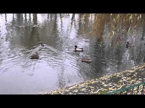 Jan und die Enten    Jan and the Ducks.m2ts