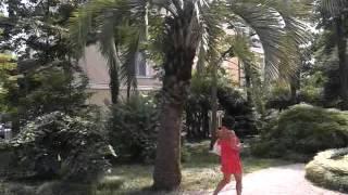 Абхазия   Сухум, Ботанический сад 4(Видео по теме Абхазии:Абхазия,новый афон,абхазия 2015,отдых в абхазии,сектор абхазия отдых,отдых в абхазии..., 2015-09-21T03:22:56.000Z)