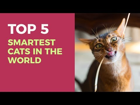 Top 5 smartest cats in the world