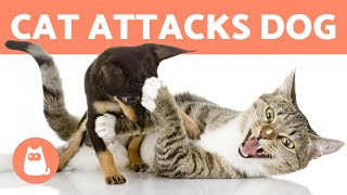 My CAT Keeps ATTACKING My DOG 😾🐶 (Reasons & How to Stop It)