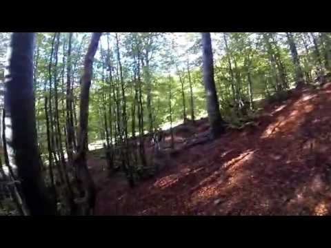 Funghi - perlustrazione Zum Zeri-Albareto 17 set 013