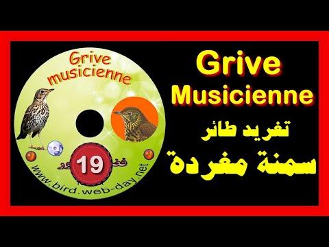سمنة مغردة (CD) Grive Musicienne