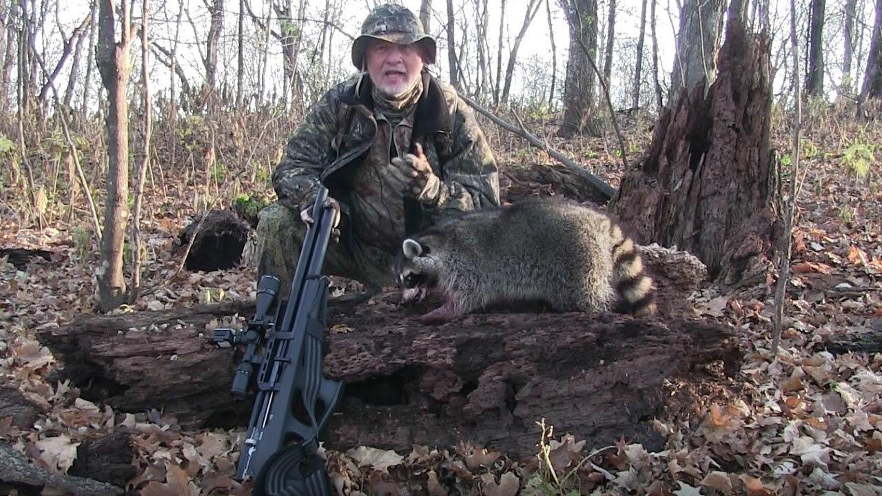 Airgun Hunt: raccoon meets the FX Wildcat!