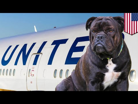 United Airlines puts dog in overhead bin, doesn't go so well for dog - TomoNews