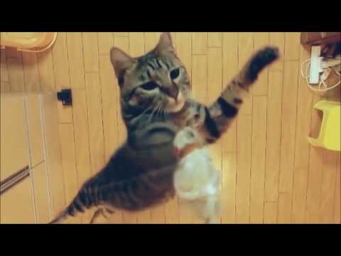 Cats in Slow Motion - HD compilation