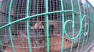 Зоопарк на Садовой г. Новокузнецк