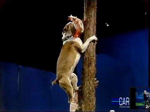 Amazing Dog Trick: Dog Climbing Tree on Johnny Carson's Tonight Show