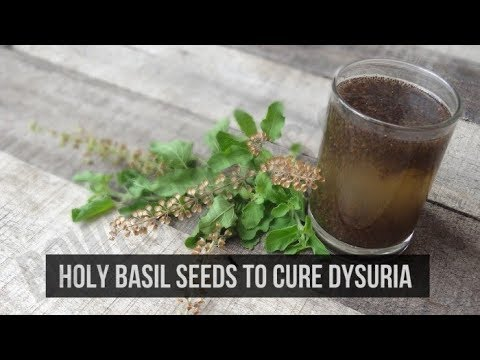 Tulsi dried flowers to treat dysuria - Herbal remedy DIY