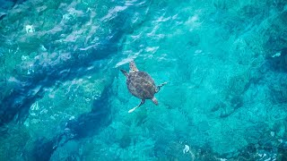 Warm tropic waters are home to many marine life species | Oceana