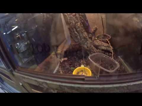 Зоомагазин рептилий, амфибий и беспозвоночных«ГЕККО» и покупка корма для ТРАМПА