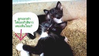 ลูกแมวดำน่ารัก || lovely black kittens