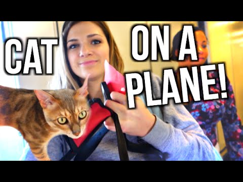 TAKING MY CAT ON AN AIRPLANE! | Vlogmas Day 18!