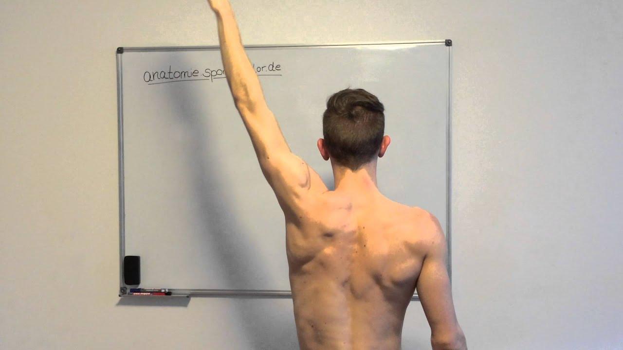 Elevation im Schultergelenk - YouTube