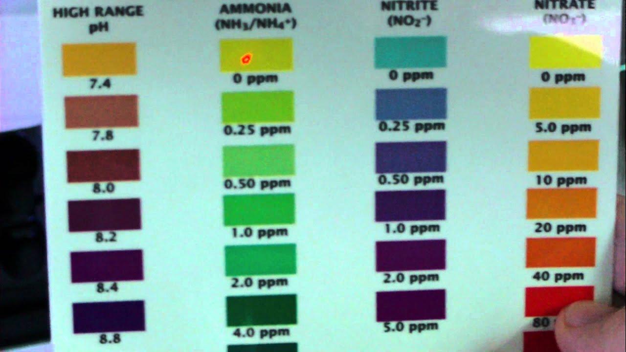 Api saltwater test kit color chart freshwater master test kit hd image of api saltwater master test kit review youtube api master test kit color chart 205919 nvjuhfo Gallery