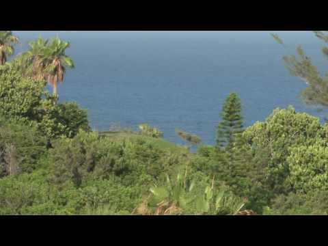 view of caribbean sea through trees in bermuda bjvq qier  D