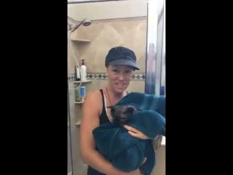 How to Properly Bath a CAT/SPhynx Cat!