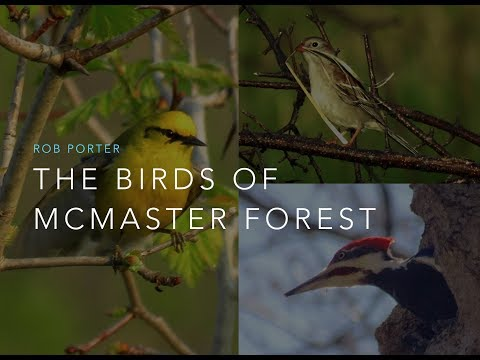 """""""The Birds of McMaster Forest"""" talk by Rob Porter"""