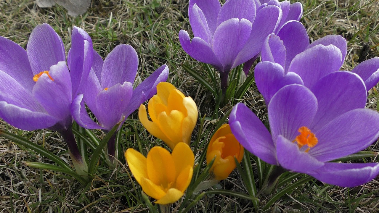 Image result for jarní květiny