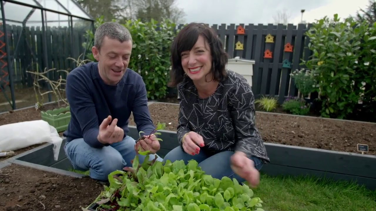 Download Beetroot Growing Guide- GROW COOK EAT