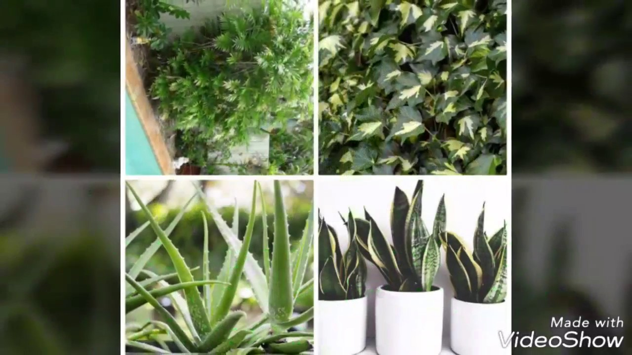 Air Purifying house plants recommended by NASA on