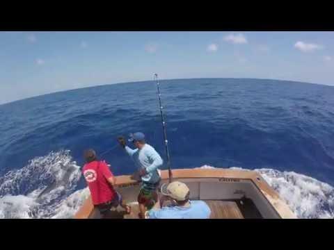 Calypso 800lb Blue Marlin