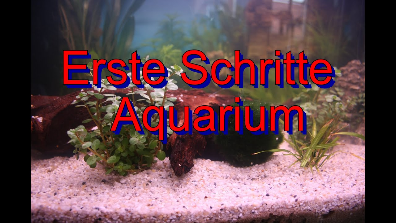 erste schritte aquarium youtube. Black Bedroom Furniture Sets. Home Design Ideas