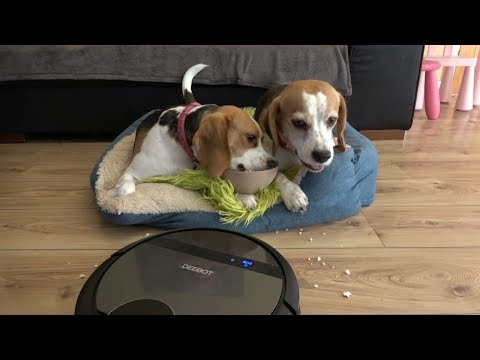 Smart Dog Deals With Dogs Hair | Funny Dog Testing Robot Vacuum