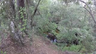 Florida Trail at Etoniah Creek State Forest