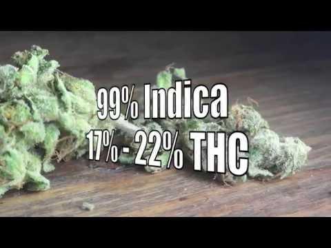 Tora Bora Review * Weed * Strain * Cannabis