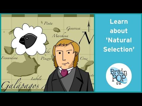 BrainPOP UK - Natural Selection