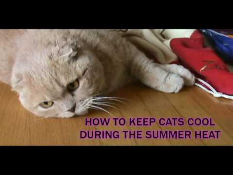 how to keep cats cool during the summer heat hot weather pet care tips prevent cat heatstroke. Black Bedroom Furniture Sets. Home Design Ideas