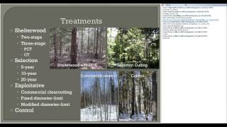 Maintaining Health and Productivity in Northeastern Spruce Fir Forests