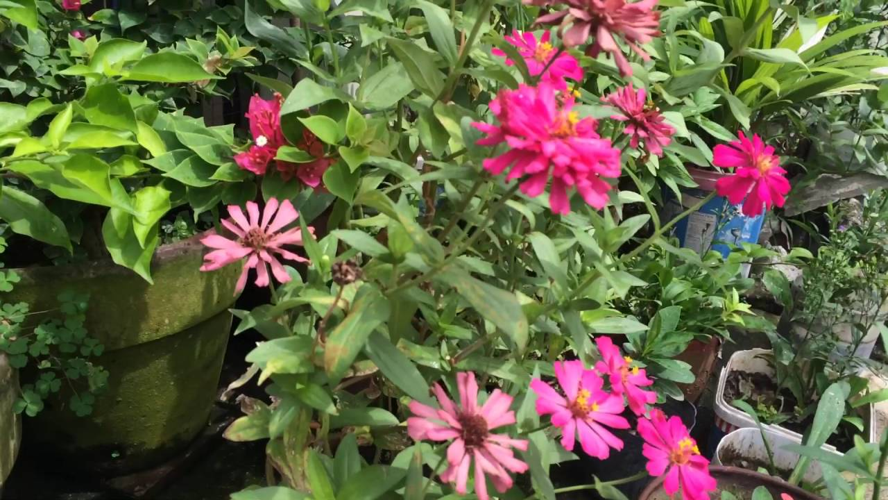 Three Flowering Plants You Can Easily Reproduce At Home Philippines