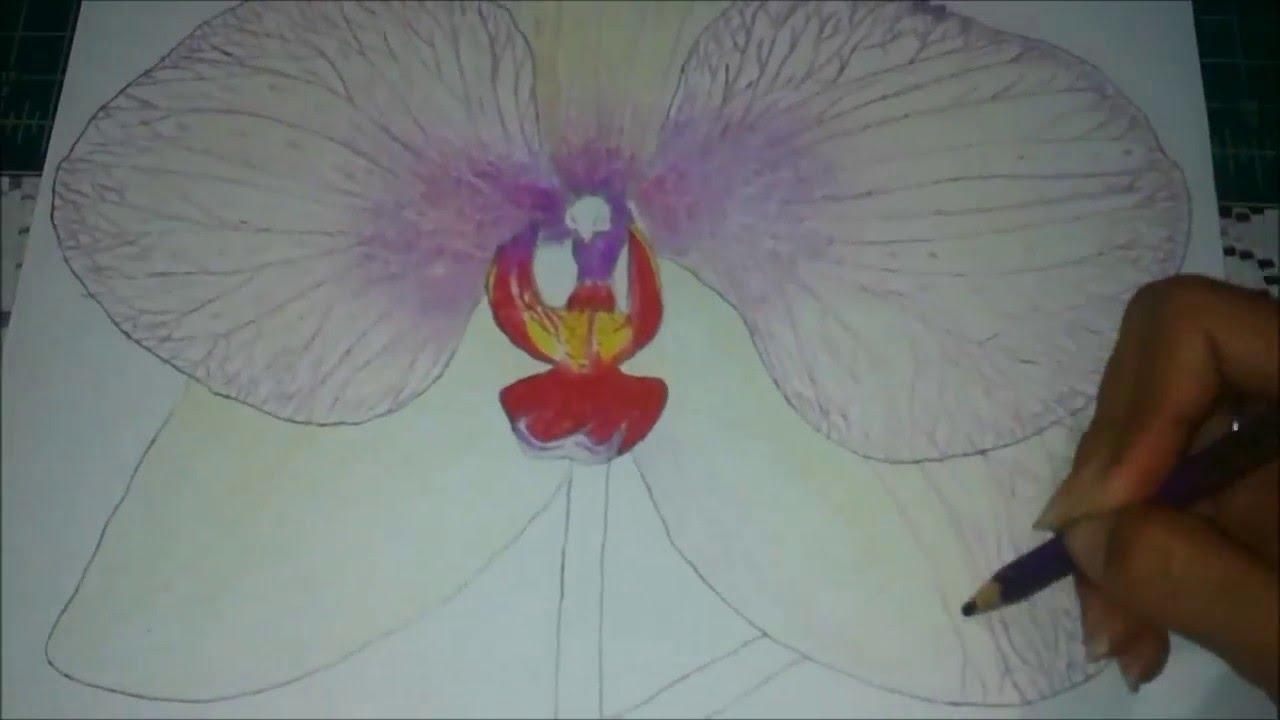 Dibujo de una Orquídea - Dayana Camacho - YouTube