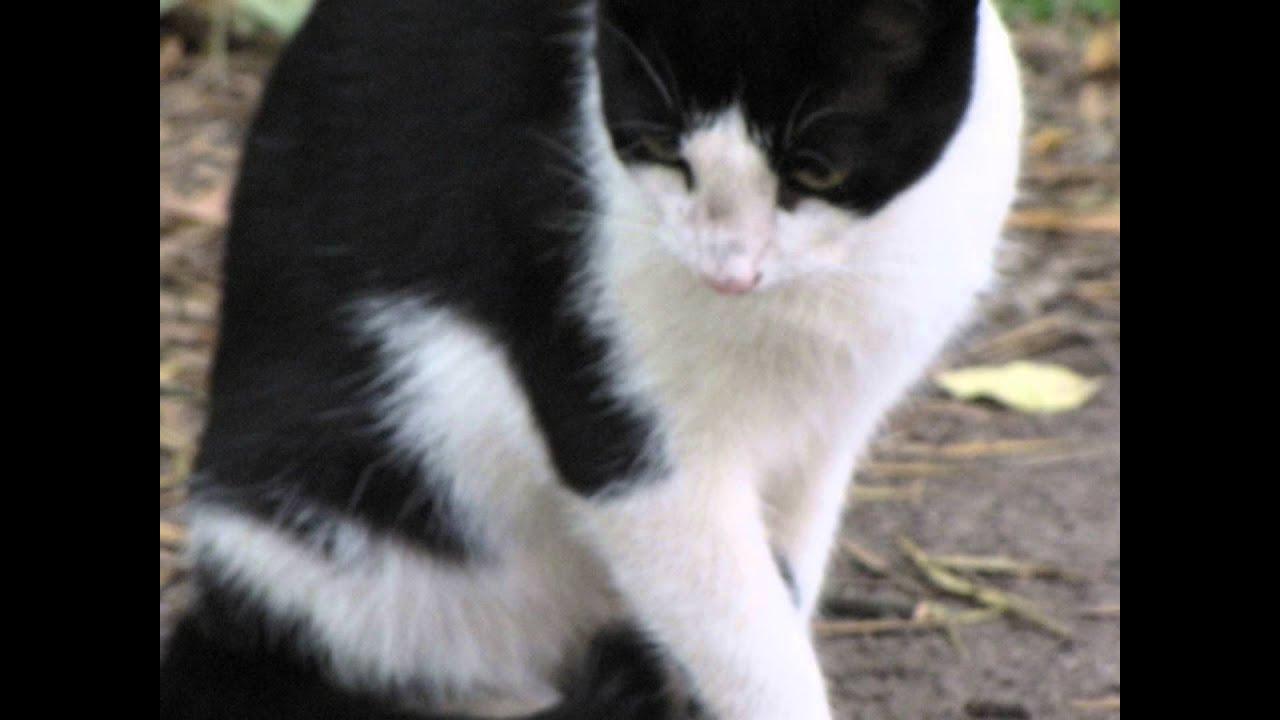 кошки фото черно-белые