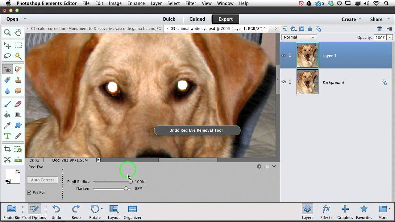 Pictures Of Dogs Removing Pet Eye Photoshop