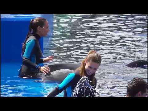 Dolphin show - Valencia
