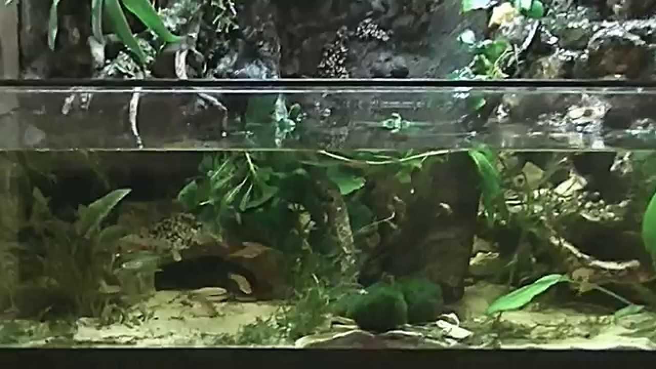 Fish tank terrarium - Aquarium Paludarium Vivarium Riparium Waterfall Update Maart 2014