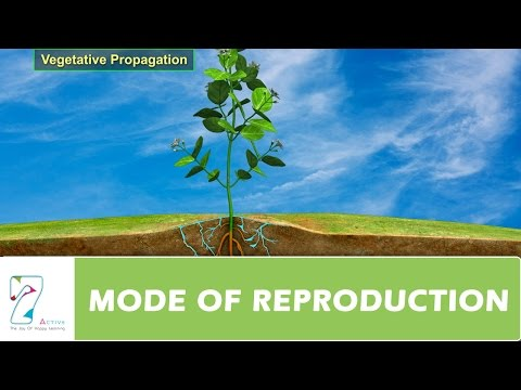 MODE OF REPRODUCTION _  PART 01