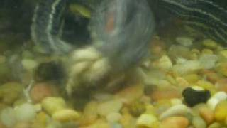 Turtles vs Jumbo Crawfish final conclusion