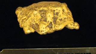 27 OUNCE Montana Gold Nugget Found! Huge Chunk of Placer Gold