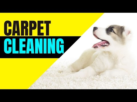 Getting carpets dry!