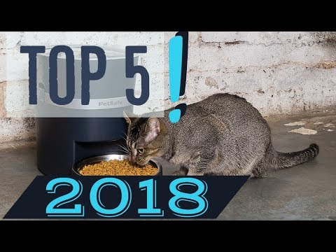 Best Automatic Feeders For Cats in 2019