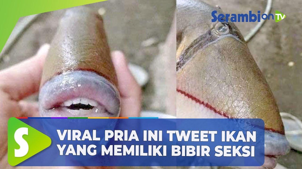 Viral Pria ini Tweet Ikan yang Memiliki Bibir Seksi, Warganet: Seksi Betul