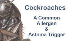 Cockroaches: A Common Allergen & Asthma Trigger