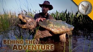 Alligator Snapping Turtle - Behind the Adventure