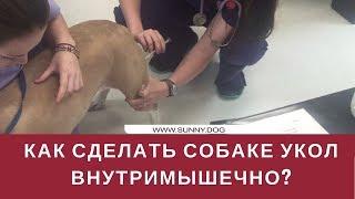 видео Как сделать укол собаке?