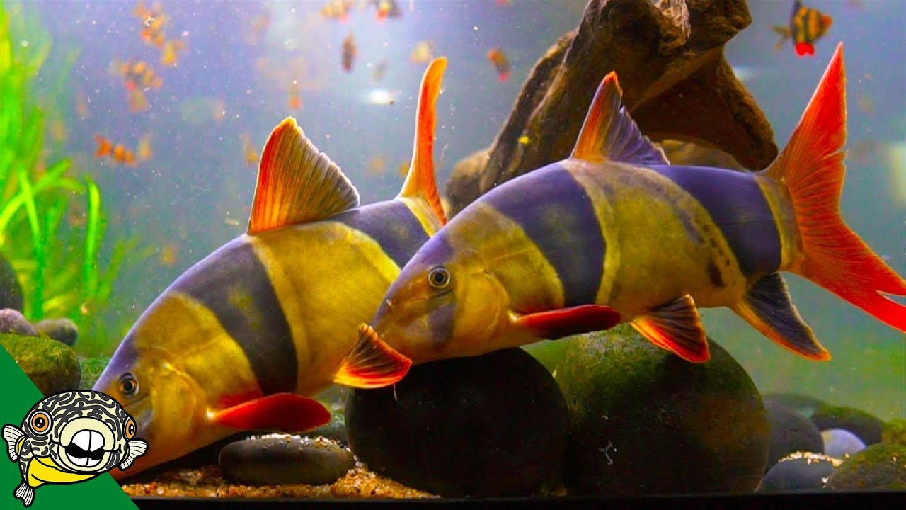 they-re-huge-800-gallon-aquarium